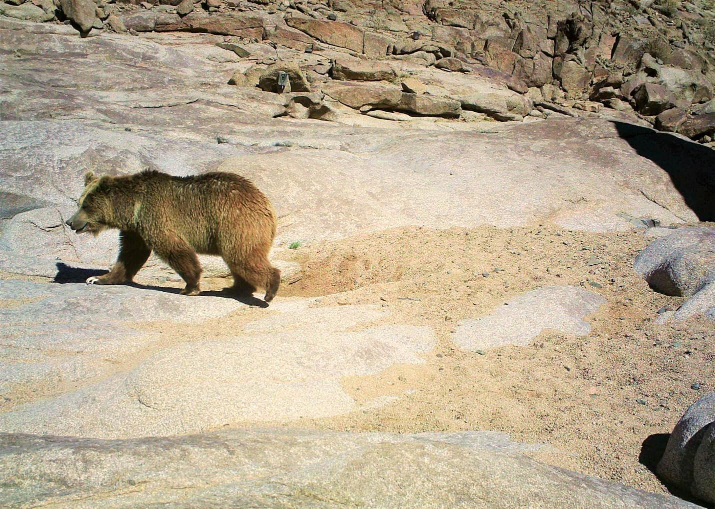 Mongolia steppe Wildlife Initiative